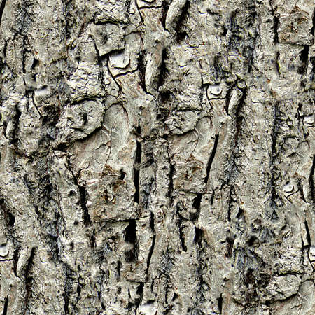 Tree Bark Seamless Texture Tile Banque d'images