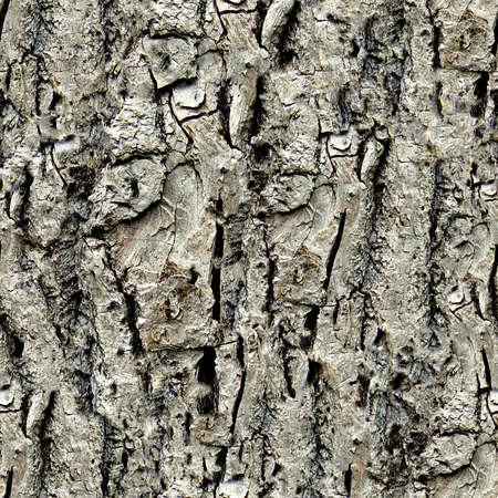 木の樹皮のシームレスなテクスチャ タイル