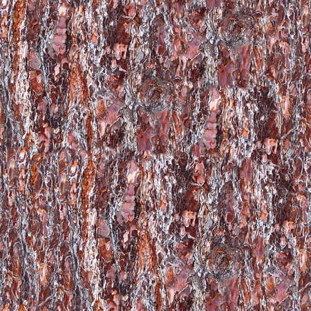Tree Bark Seamless Texture Tile Stock Photo - 14215855