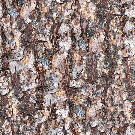 Tree Bark Seamless Texture Tile Stock Photo - 14215864
