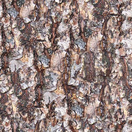 Tree Bark Seamless Texture Tile Stock Photo