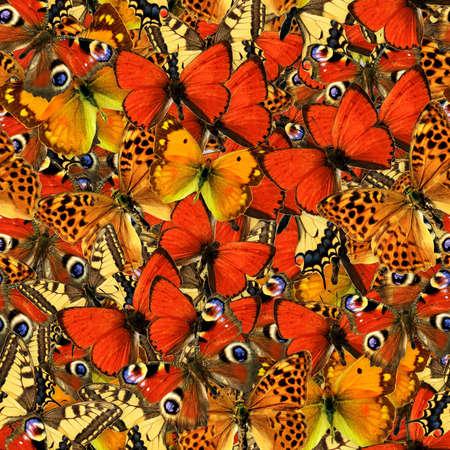 swarm: Butterflies Seamless Texture Tile Stock Photo