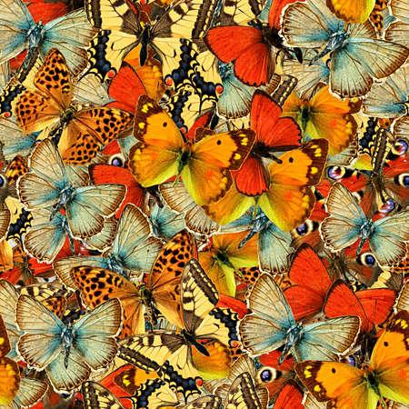 蝶シームレス テクスチャ タイル 写真素材