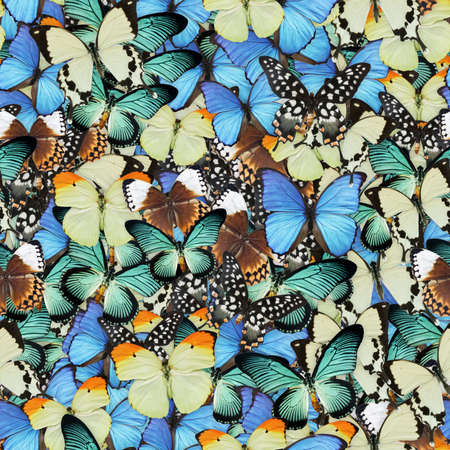 Butterflies Seamless Texture Tile Banque d'images