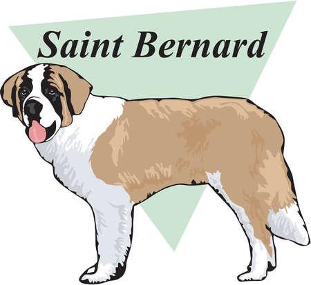 Saint Bernard Illustration