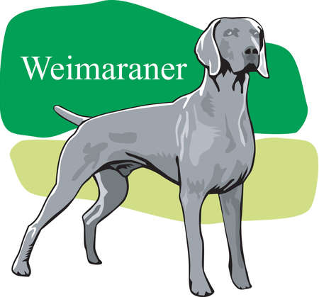 Weimaraner Illustration  イラスト・ベクター素材