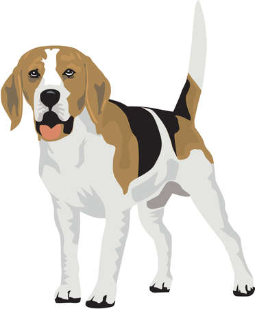 Beagle Illustration Çizim