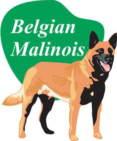 Belgian Malinois Illustration