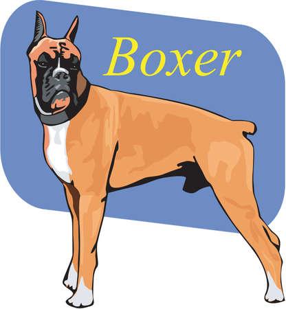 Boxer Illustration Иллюстрация