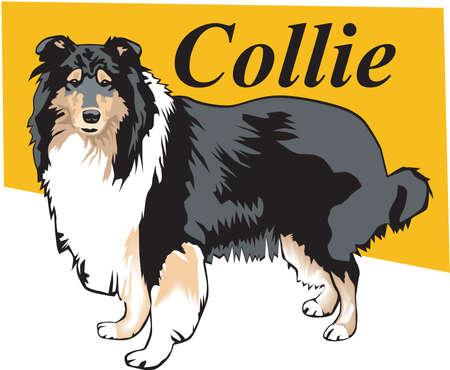 Collie Illustration