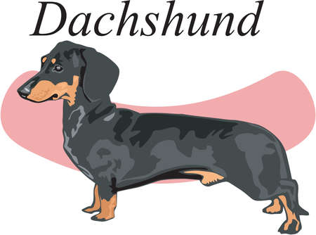 Dachshund Illustration Фото со стока - 83866318
