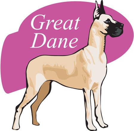 great dane: Great Dane Illustration Illustration