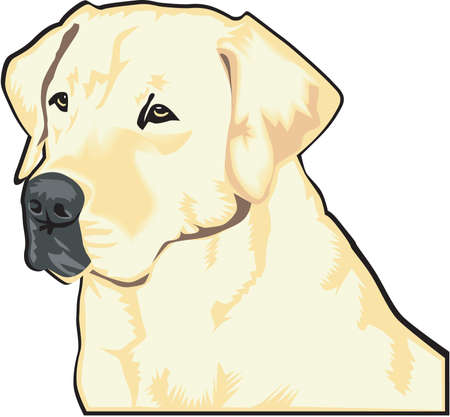 Labrador Retriever Illustration