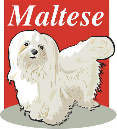 Maltese Illustration