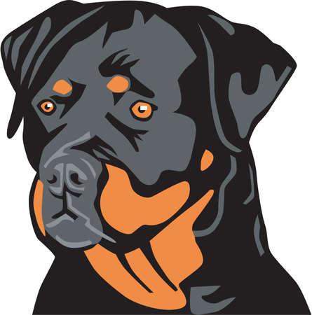 Rottweiler Illustration