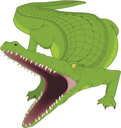 Alligator Illustration Ilustração