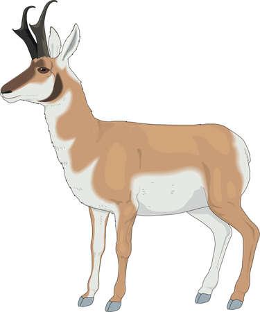Pronghorn Antilopen Illustration Standard-Bild - 83852522