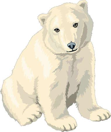 Polar Bear Cub Illustration