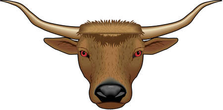 Longhorn Bull Illustration