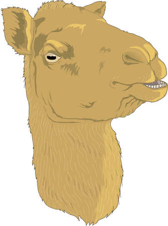 Camel Head Illustration