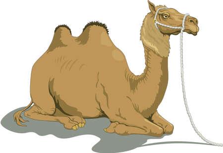 Kameel illustratie