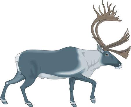 Caribou Illustratie Stock Illustratie