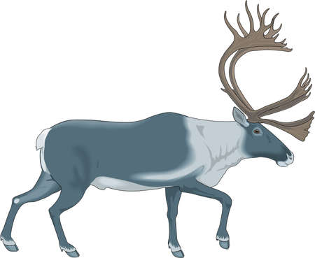 Caribou Illustration Stock Vector - 83852562
