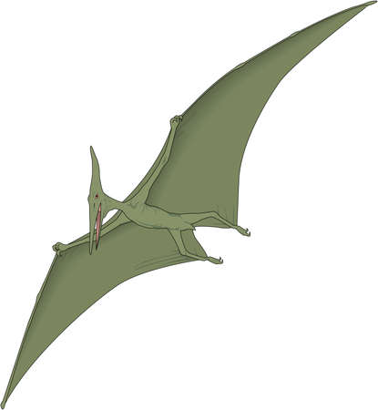 Pterodactyl Illustration