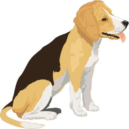 Beagle Illustration Ilustrace