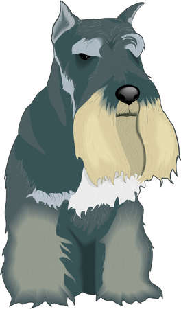 Scottish Terrier Illustration Illustration