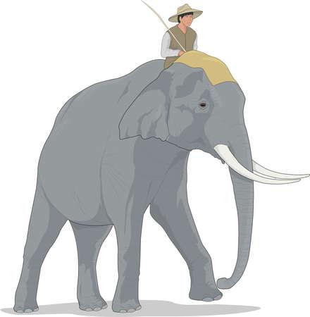 아시아 코끼리 일러스트레이션