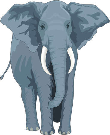 아프리카 코끼리 일러스트레이션 일러스트