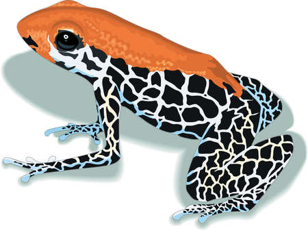 arrow poison: Arrow Poison Frog Illustration