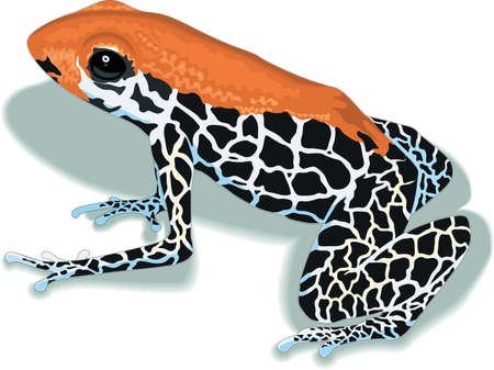 Arrow Poison Frog Illustration