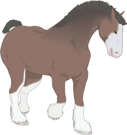 Clydesdale Illustration
