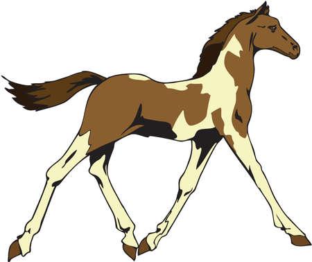 Horse Illustration Illusztráció