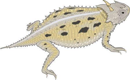 ツノガエルの図