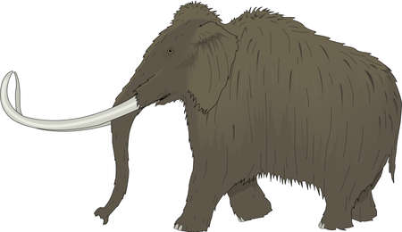Wooly Mammoth Illustration