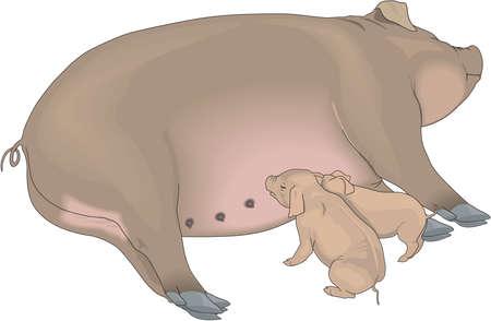 Sow and Piglets Illustration Illustration