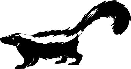 Skunk Illustration