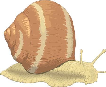 달팽이 일러스트레이션