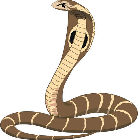 Cobra Illustration on white background