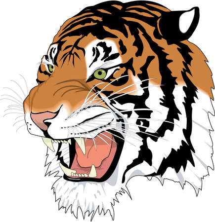 Siberian Tiger Head Illustration