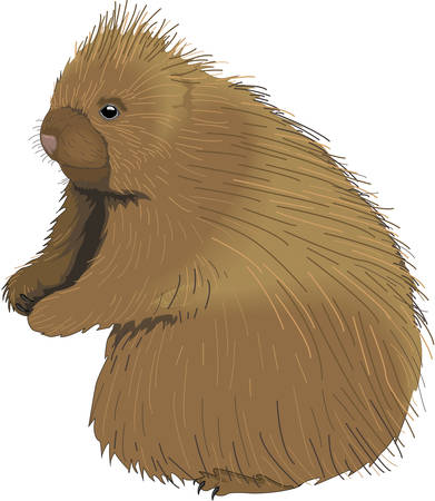 Porcupine Illustration