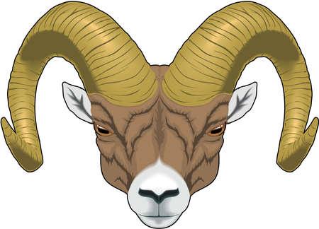 Ram Head Illustration Stock Vector - 83872180