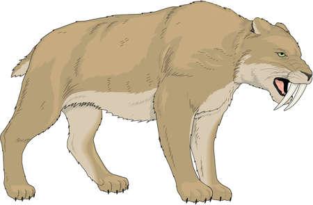 saber tooth: Saber Tooth Tiger Illustration