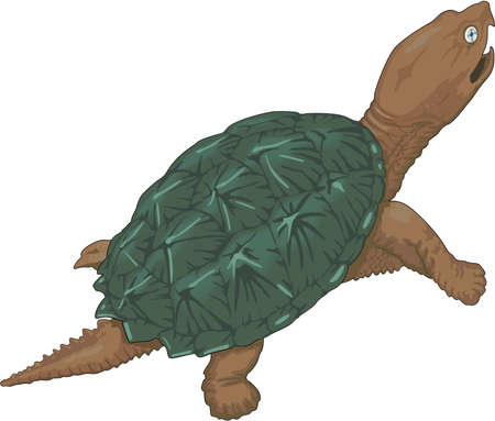 Snapping Turtle Illustratie