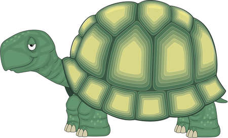 Turtle cartoon on the white background
