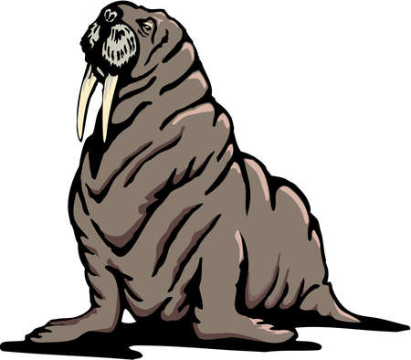 Walrus Illustration on the white background