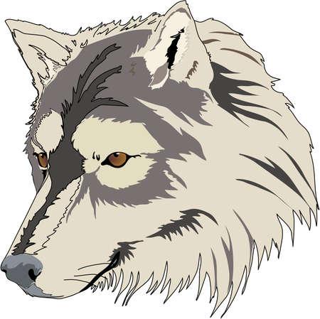 늑대 머리 일러스트